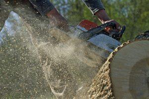 Colorado Springs Stump Removal Service