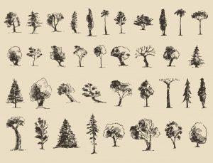 Tree Pruning Colorado Springs
