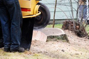 Tree stump grinding Colorado Springs