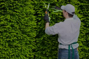 Arborist Colorado Springs