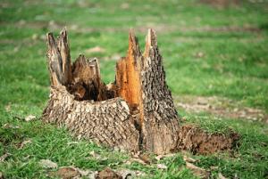 Tree Removal Colorado Springs