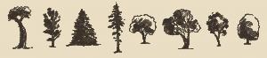 Colorado Springs Tree Care