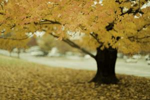 Tree Pest Control Service