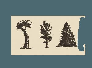Colorado Springs Tree Removal