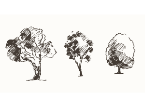 Tree removal service Colorado Springs