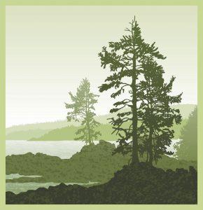 Colorado Springs Tree Services