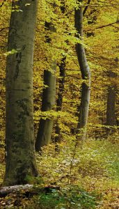 Colorado Springs Residential & Commercial Tree Services