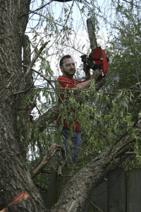 Colorado Springs Professional Tree Trimming