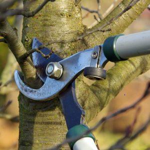 Professional Tree Care Colorado Springs