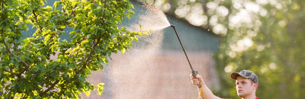 Professional Tree Spraying Service