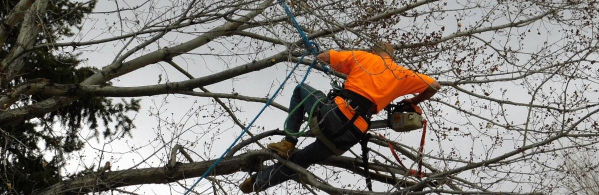 Tree Trimming Colorado Springs