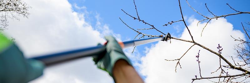 tree trimmers colorado springs, colorado