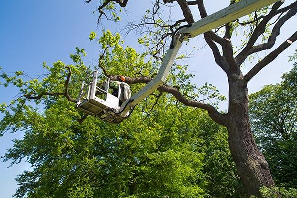 city tree removal