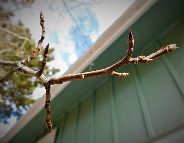 tree inspection colorado springs