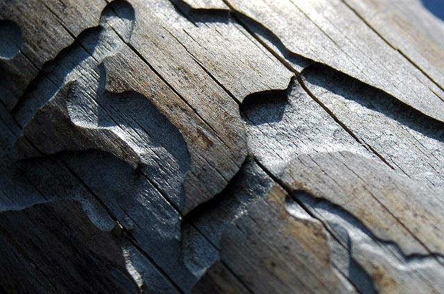 bark beetle prevention
