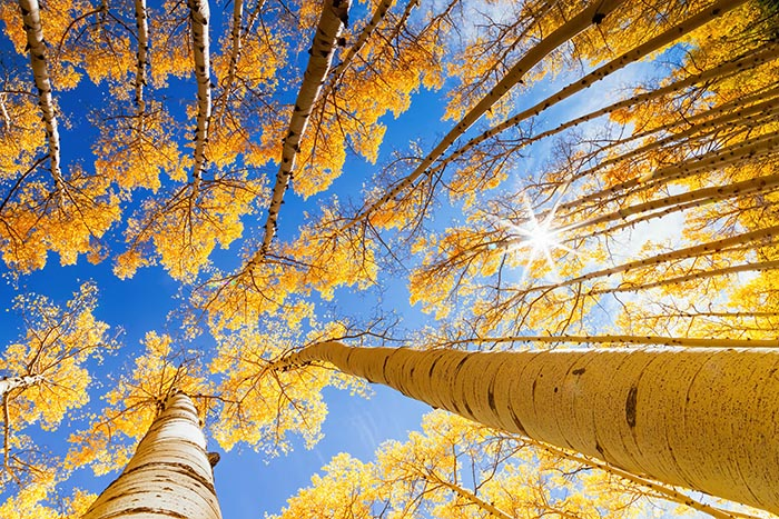 aspen tree service colorado springs