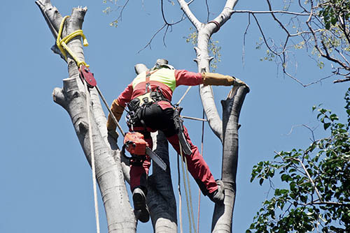 tree topping colorado springs