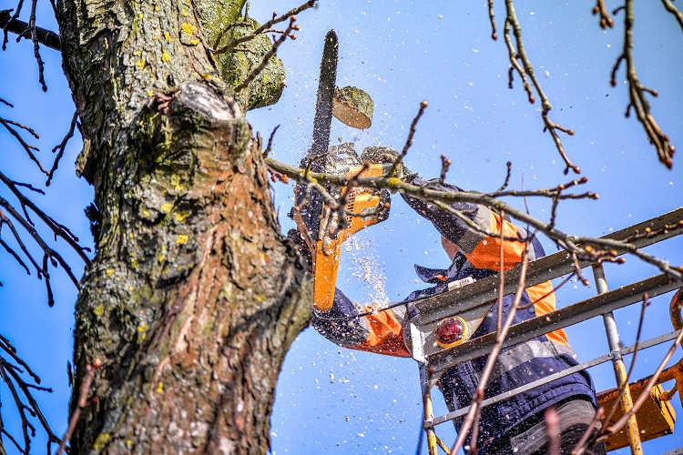 Professional Tree Trimming in Colorado Springs