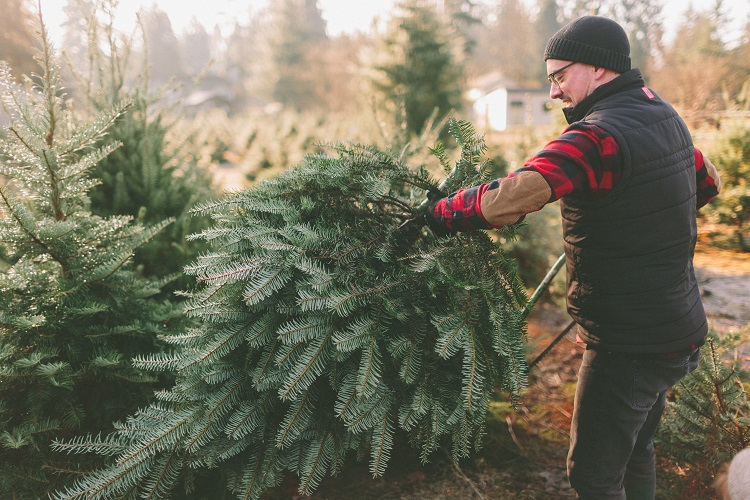 Tips for cutting down a christmas tree