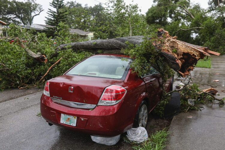 Storm Damage and Emergency Tree Removal